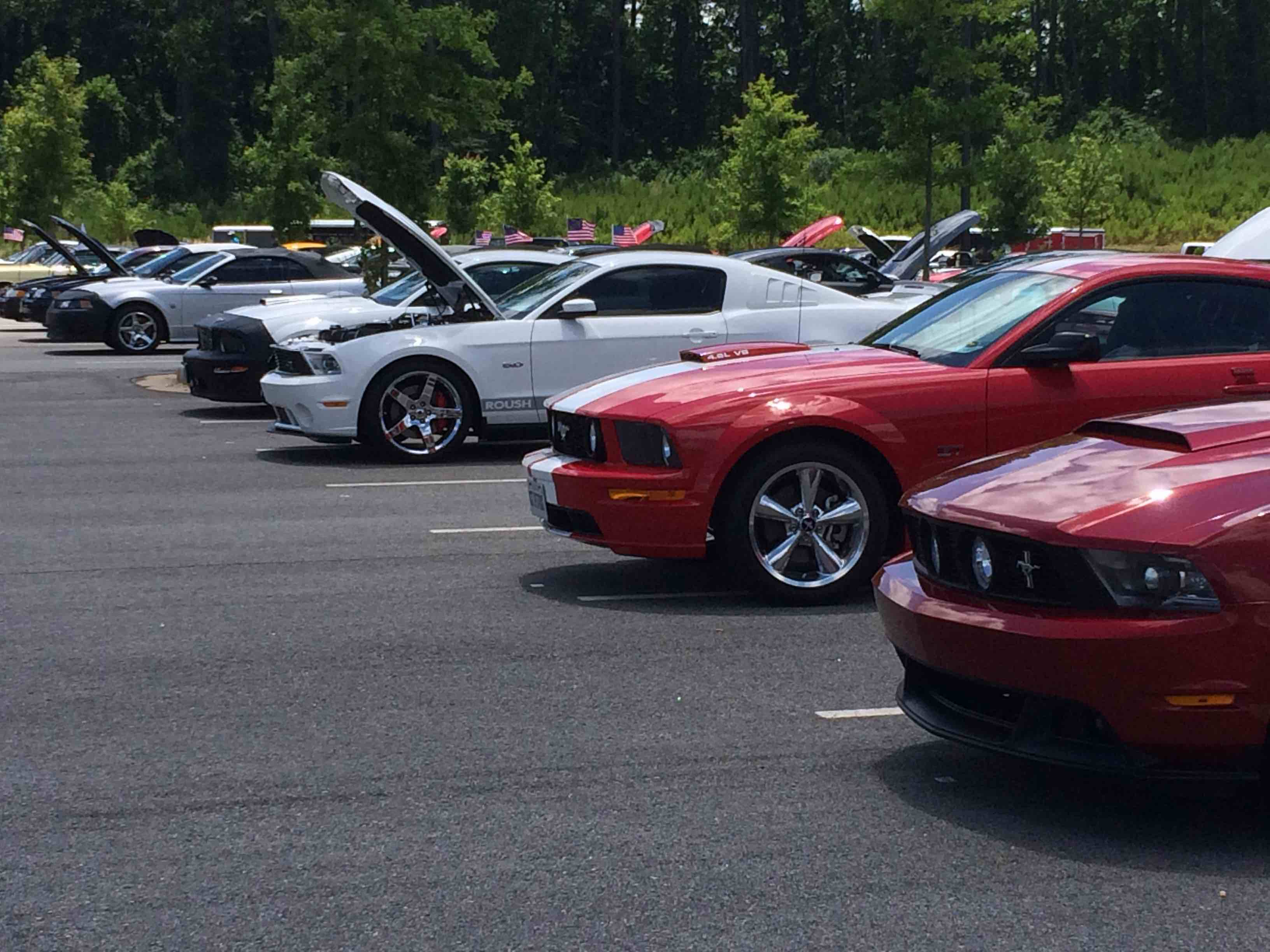 Modern ford mustangs at a car show 2016